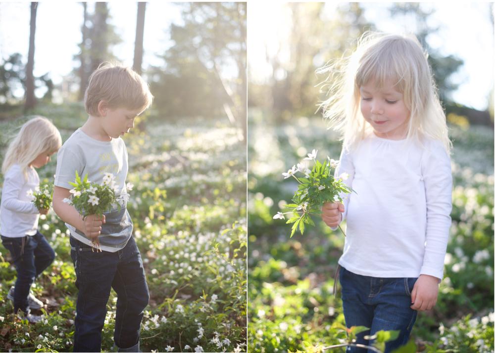 familjefotografering vitsippor barnfotografering Täby